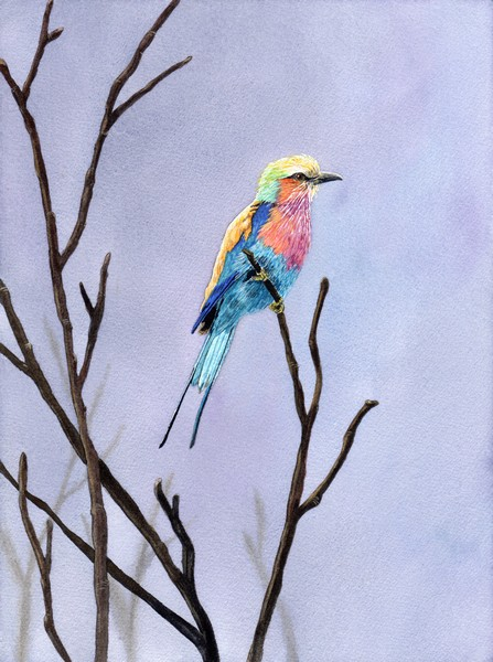Diane Pope, Lilac Breasted Roller