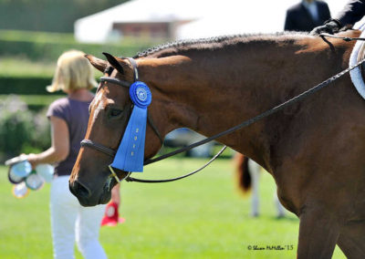 Horse Ribbon 2