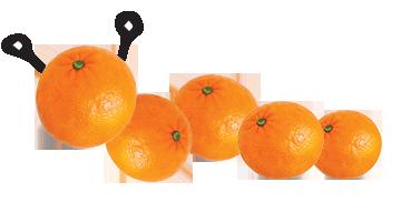 OrangeCaterpillar