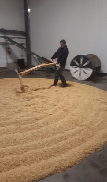 Floor malting requires raking grain every 8-10 hours after it's steeped. Photo credit: James Weed
