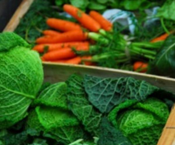 Nutrition & GI Health