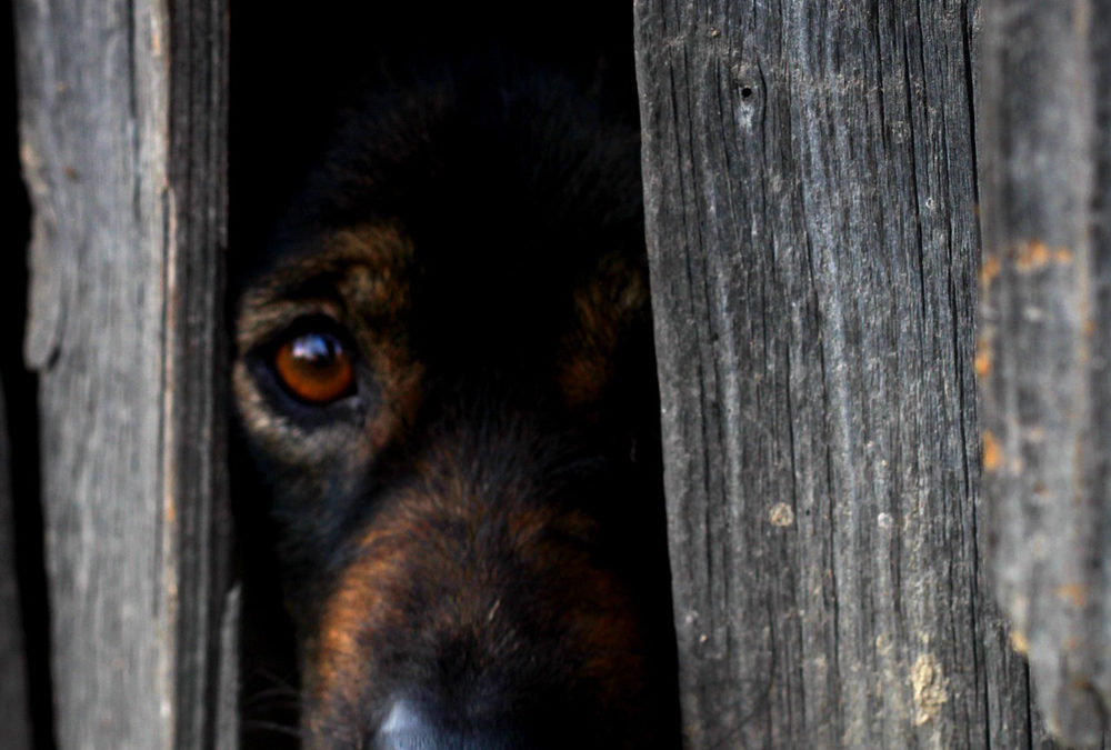 Points to ponder about Separation Anxiety and your dog