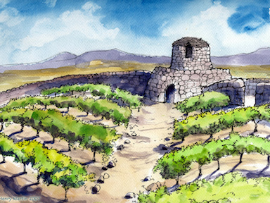 The Vineyard Owner