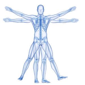 23222533 - vitruvian man - skeleton