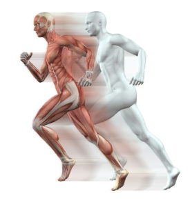 38974816 - 3d render of male figures running with skin and muscle map