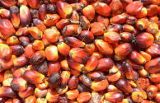 Abuse in the palm oil industry