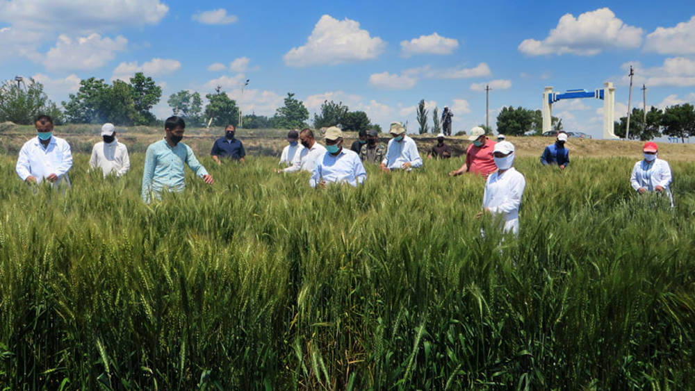ICARDA and CGIAR collaboration to protect agriculture field despite of COVID-19
