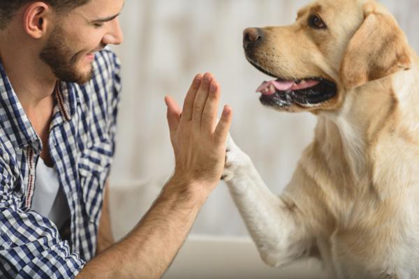 https://secureservercdn.net/198.71.233.159/i1r.cd1.myftpupload.com/wp-content/uploads/2018/09/Your-dog-loves-when-you-smile.-Here's-why-600x400.jpg