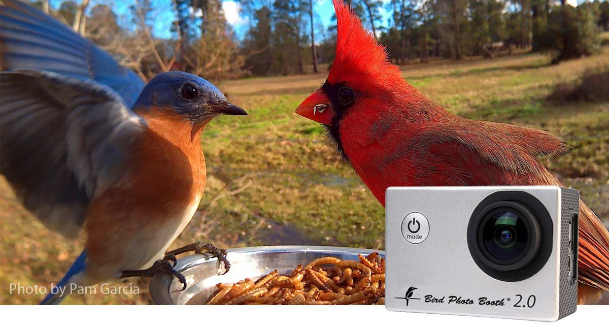 Bird feeder and bird cam uses motion detection to capture close up bird photos in stunning detail.