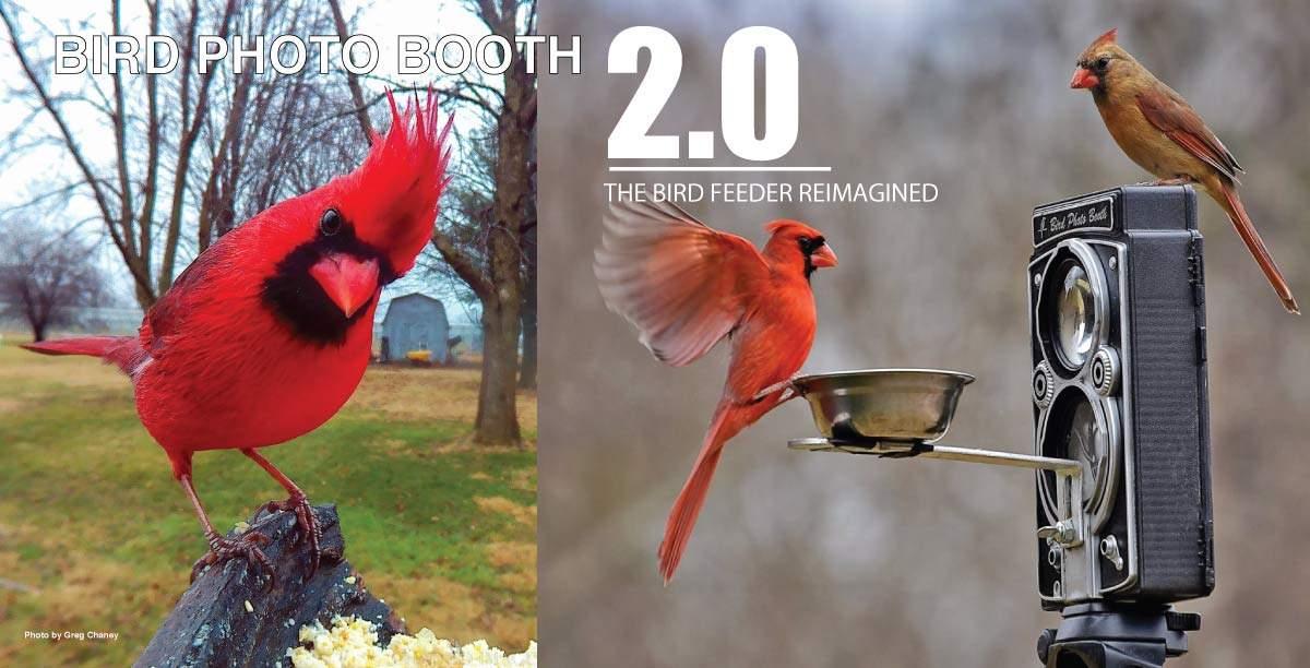 Combined bird feeder and bird camera for bird photography.