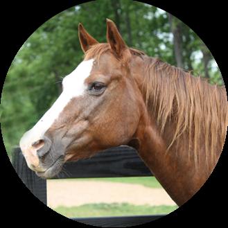Wedding Venue Horse Profile Shot Opposite