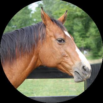 Wedding Venue Horse Profile Shot