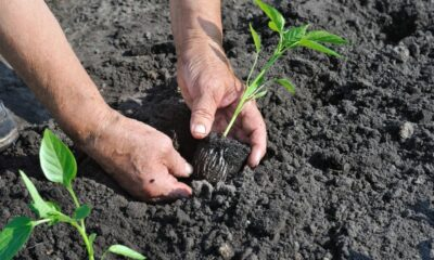 Useful Tips for Successful Transplanting