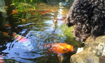 Effective Solutions to Keep Your Pond in Pristine Condition
