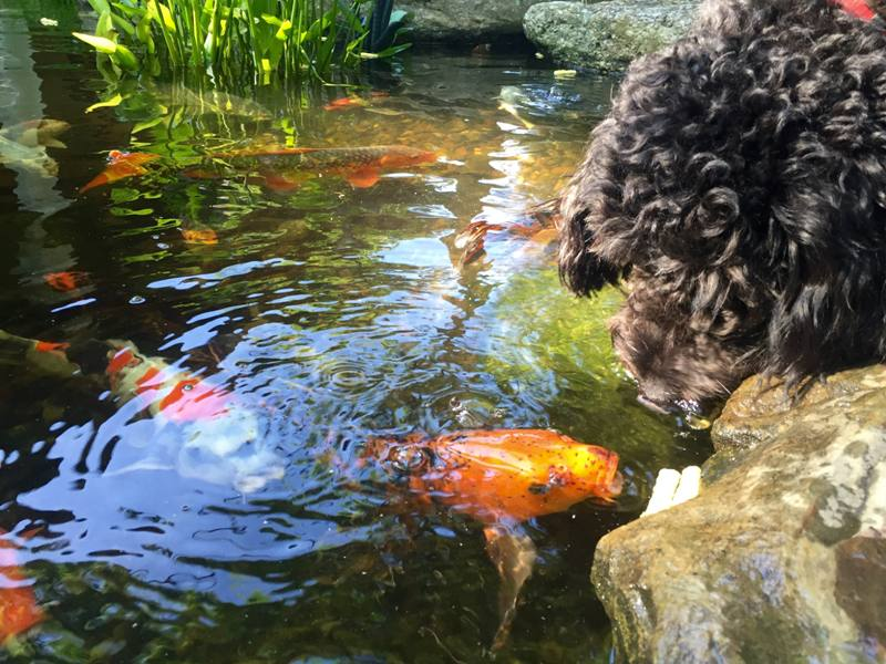 Keep Your Pond in Pristine Condition
