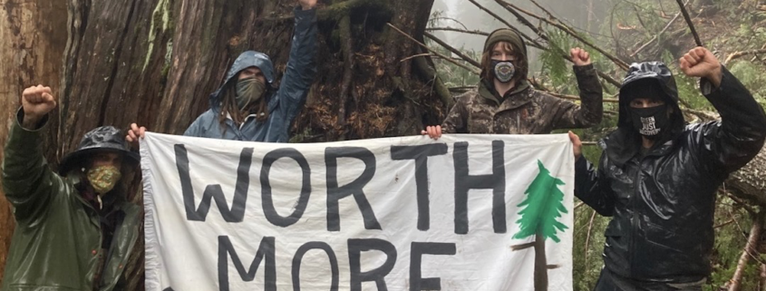 Stop Old Growth Logging Now