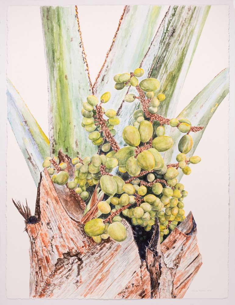 Mexican Blue Palm Fruit