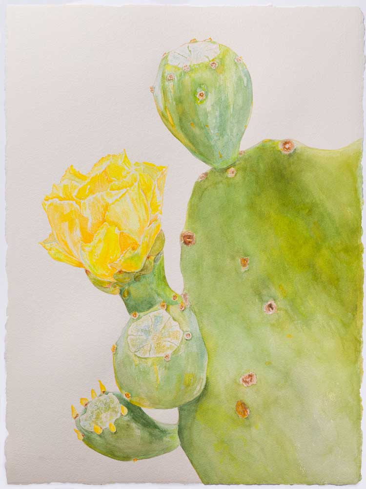 Spineless Prickly Pear
