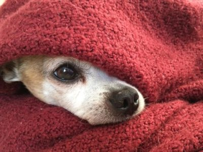 Cold Weather Pet Tips