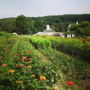flower fields in bloom
