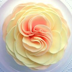 Juliet's Dream Garden Rose Sunset
