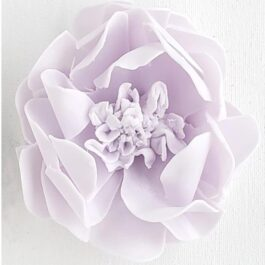 Amethyst Lavender Garden Rose