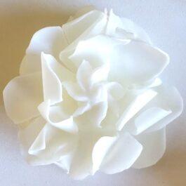 Graceful Day Gardenia