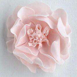 Sweet Blush Garden Rose