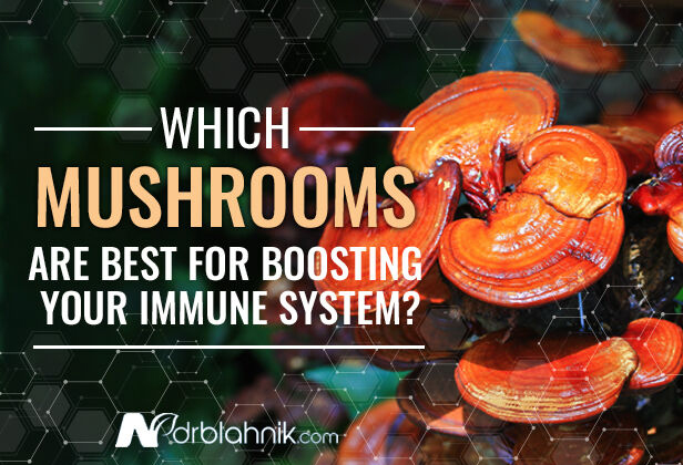 Benefits of Mushrooms for The Immune System