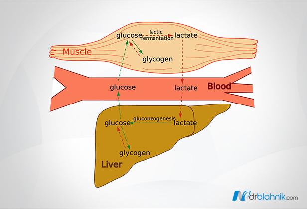 Lactate Reduction Process