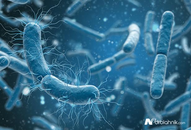 Negative Micro Bacteria