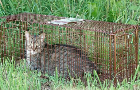 For viewing purposes only - there is always a cover on the trap