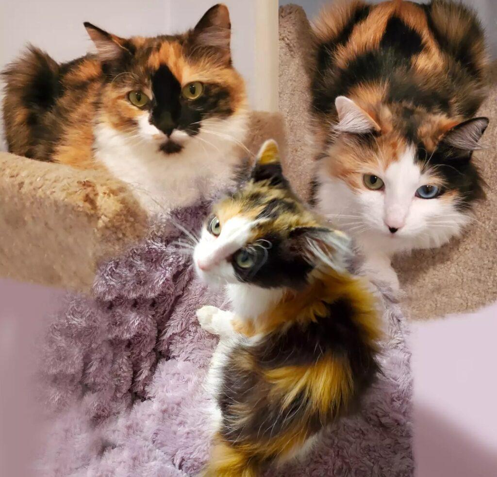 Ladyhawke, Isabeau & Ladybug