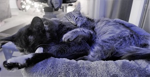 Luna & Leo