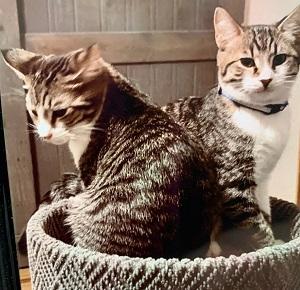 Grayson & Rupert