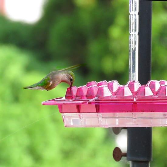 Lil Sweety feeder in Fuchsia