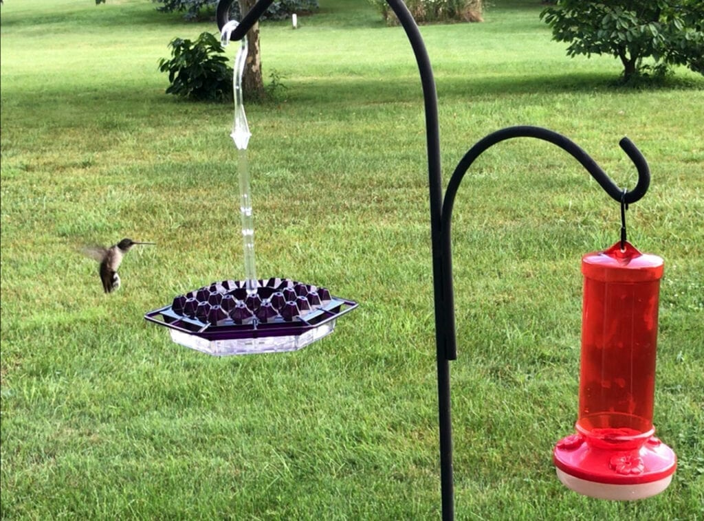 Checking out the new feeder