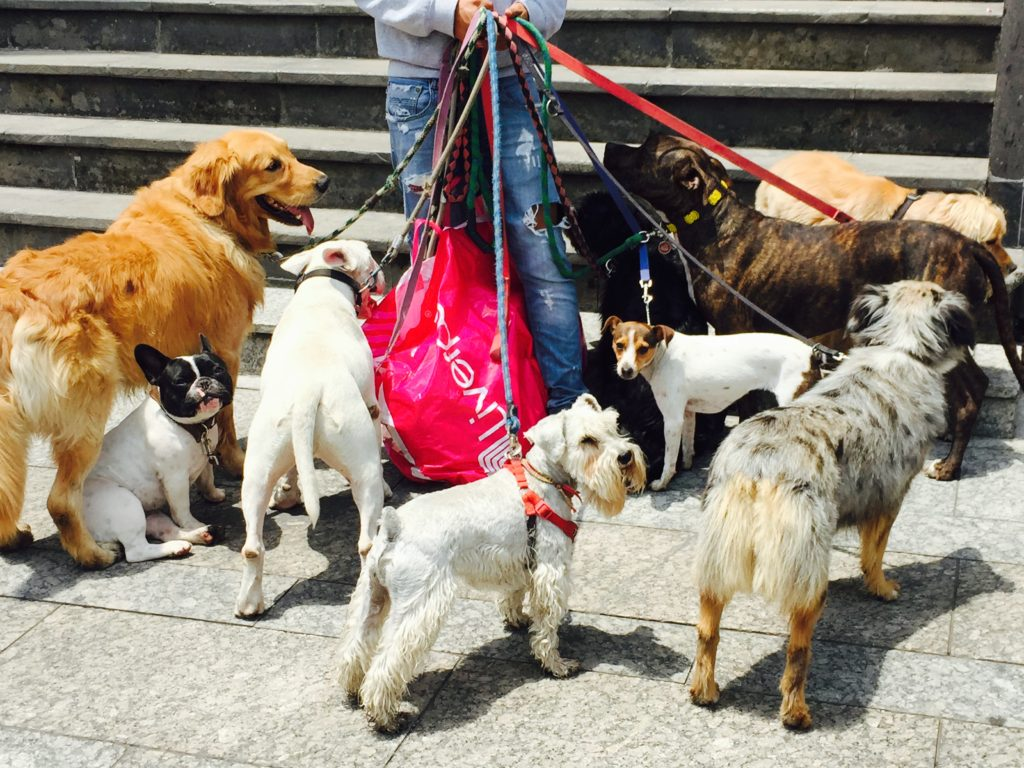 Dog walker in Mexico City