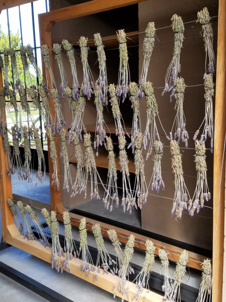 Lavender Drying at La Santisma Trinidad Winery, Mexico