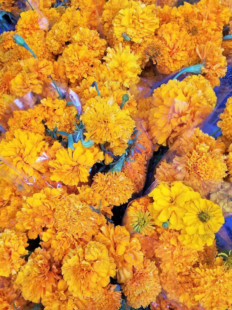 Cempasúchil flowers, also known as Aztec marigolds