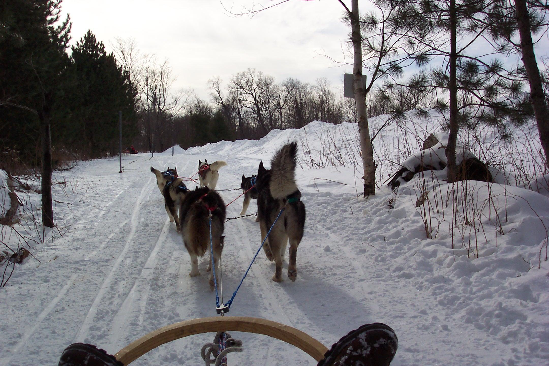Dogsledding in Canada