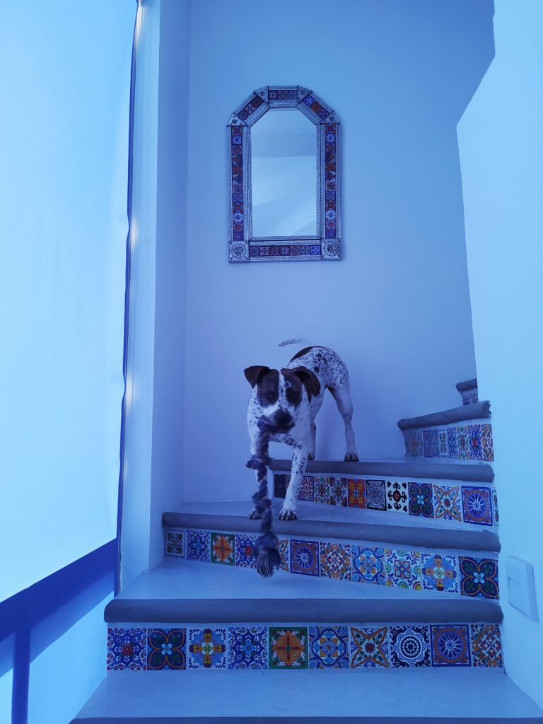 Tiled staircase with mirror and dog