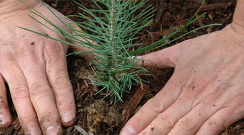 planting-tree_shutterstock_495x275
