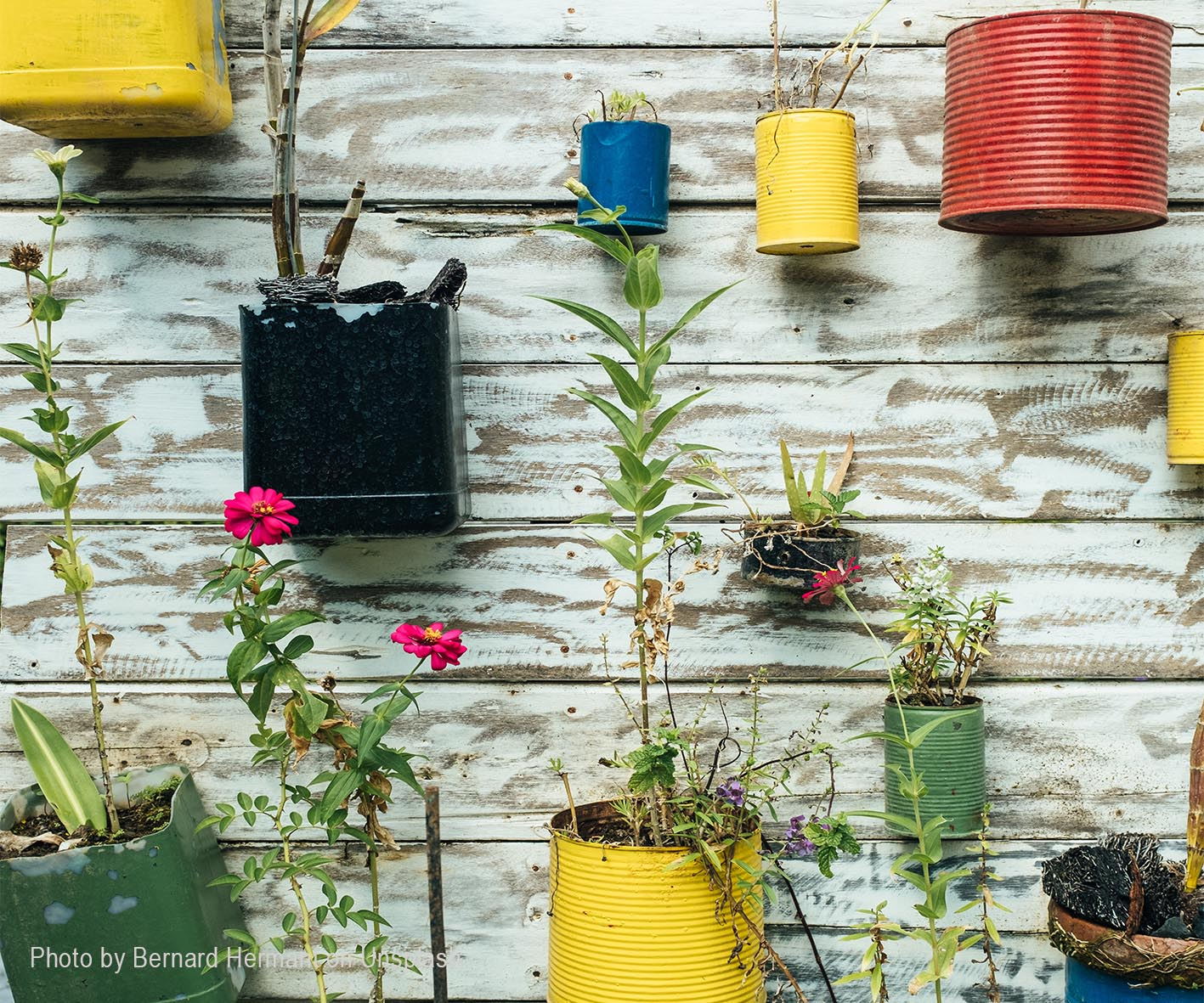 How-To-Grow-Your-Own-Container-Garden - How-To-Grow-Your-Own-Container-Garden