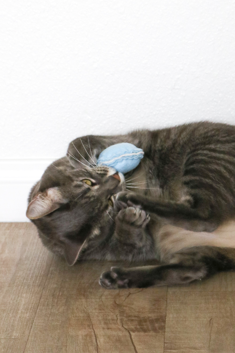 DIY Macaron Cat Toys | Club Crafted