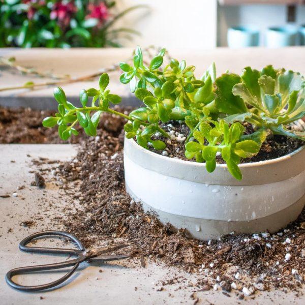 Gardening Studio Content Creation Photography