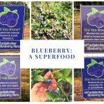 blueberry, superfood, wellness