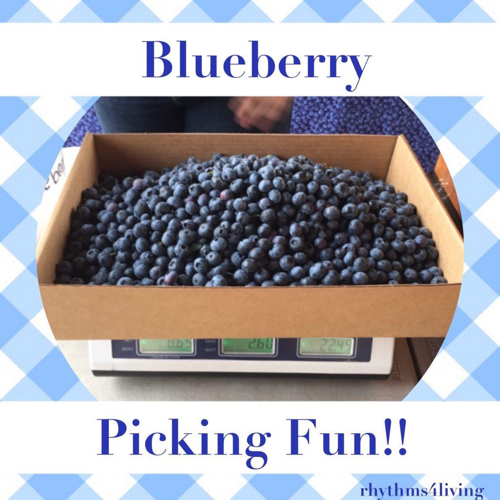 blueberry picking fun, wellness, family bonding, young children