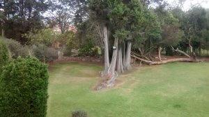 Jardín de la Casona Santa Rita 2