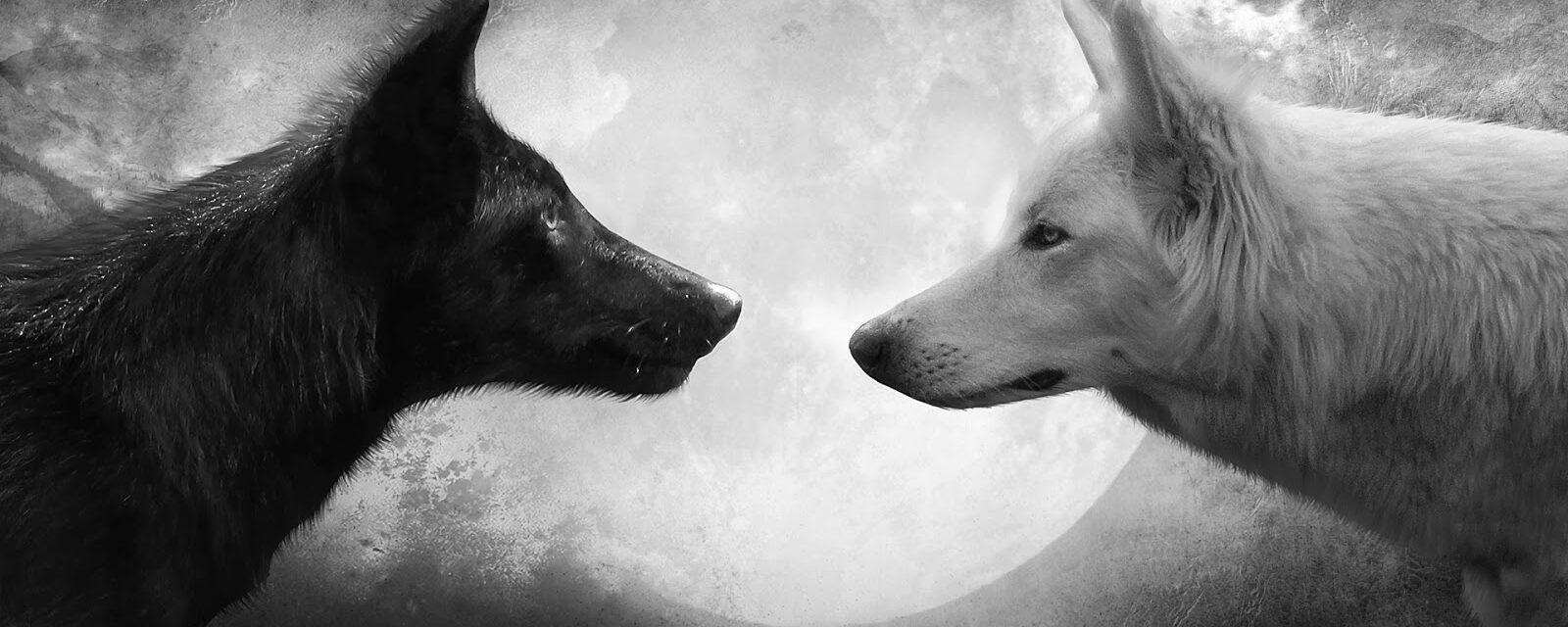 Two wolves inside each of us — Which one wins?